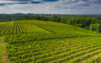 Domaine de Saint Amand commits to viticultural practices that are totally  respectful of the environnement