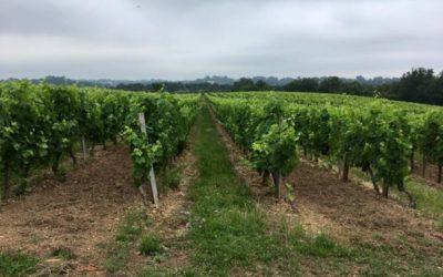 Le Domaine de Saint Amand s'engage pour une viticulture respectueuse de l'environnement